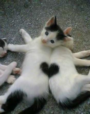 Heart Kitties
